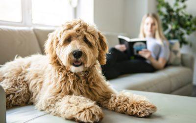 Pets dentro de casa: veja 5 cuidados que você precisa ter